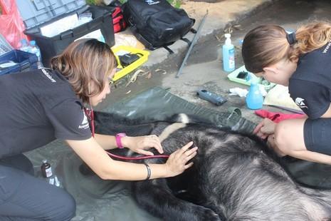 Người dân tự nguyện giao nộp cá thể gấu ngựa - ảnh 1