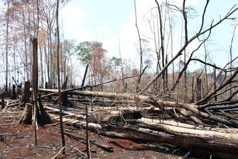 Đắk Nông kỷ luật một loạt cán bộ kiểm lâm để mất rừng - ảnh 2