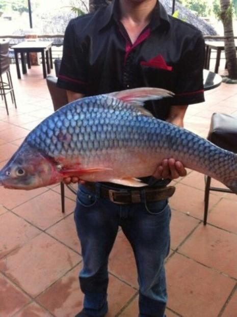 Ngư dân liên tiếp bắt được cá 'khủng' ở sông Đồng Nai - ảnh 3