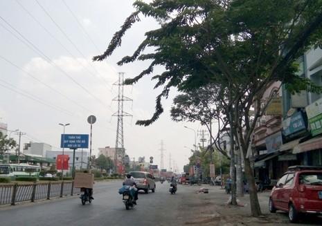 Không cho đốn 162 cây xanh ở đường Kinh Dương Vương - ảnh 1