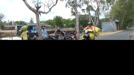 Cà Mau kênh trơ đáy, chở lúa bằng xe ôm - ảnh 3