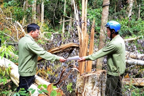 Khởi tố trùm giang hồ trang bị 'hàng nóng' đi phá rừng - ảnh 1