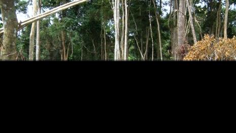 Khởi tố trùm giang hồ trang bị 'hàng nóng' đi phá rừng - ảnh 2