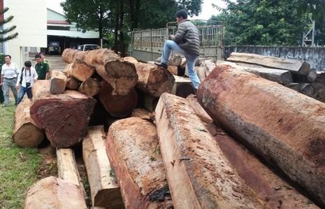 Diễn biến phức tạp vụ lâm tặc cướp lại gỗ lậu - ảnh 3