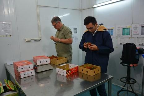 Thanh long Việt bán tại Mỹ giá 180.000 đồng/kg - ảnh 2