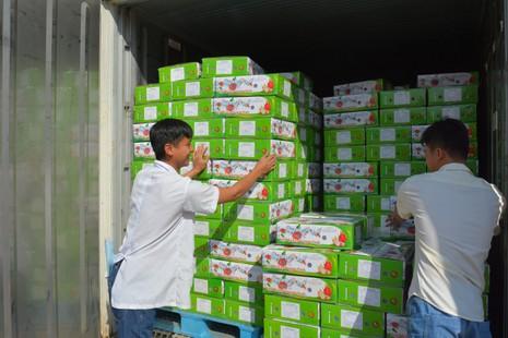 Thanh long Việt bán tại Mỹ giá 180.000 đồng/kg - ảnh 3