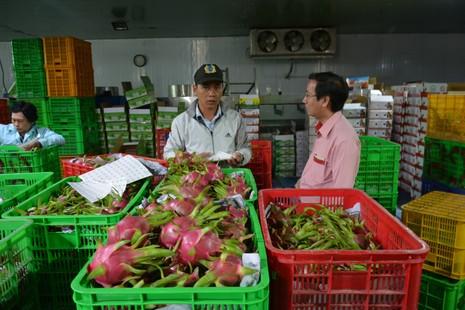 Thanh long Việt bán tại Mỹ giá 180.000 đồng/kg - ảnh 1
