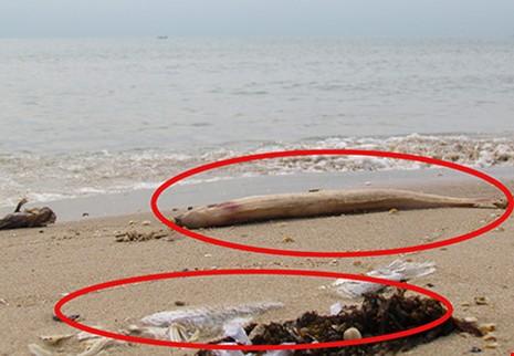 Viện Hải dương học Nha Trang tham gia tìm nguyên nhân cá chết  - ảnh 1