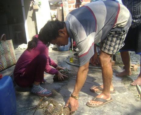 Tôm hùm chết hàng loạt, thiệt hại hơn 9 tỉ đồng - ảnh 1