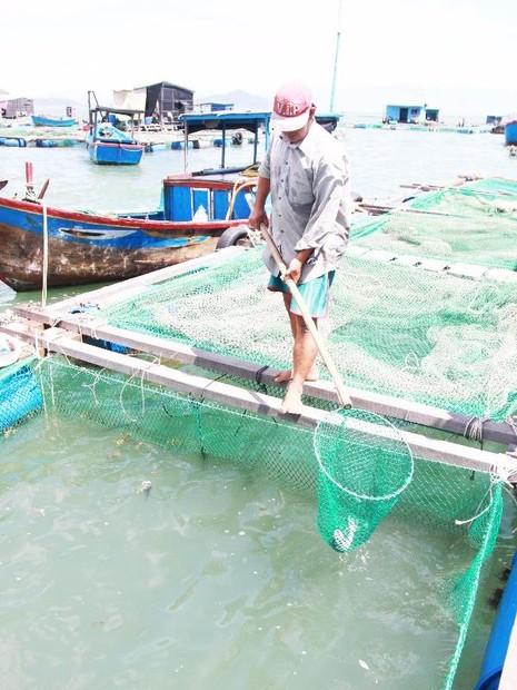 Người nuôi cá ở đầm Nha Phu bị thiệt hại nặng do cá chết hàng loạt