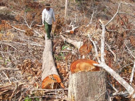 Vụ phá 110 ha rừng: Bắt giam cháu một nguyên bí thư huyện - ảnh 1