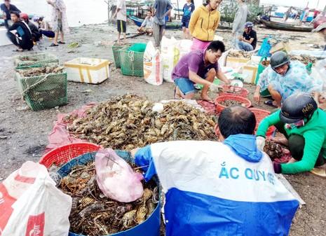 Hơn 600.000 con tôm hùm ở Phú Yên chết - ảnh 1