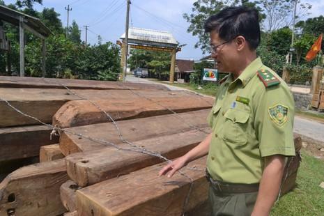 Bảo vệ rừng để lâm tặc ngang nhiên đốn hạ hơn 100 m3 gỗ quý - ảnh 1