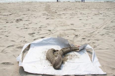 Đà Nẵng xuất hiện cá chết trôi dạt vào bờ - ảnh 3