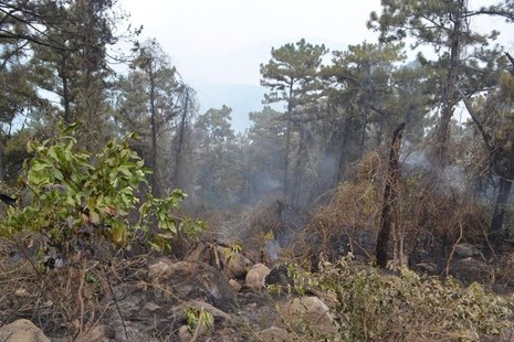 Nhiều diện tích rừng bị lửa thiêu rụi.