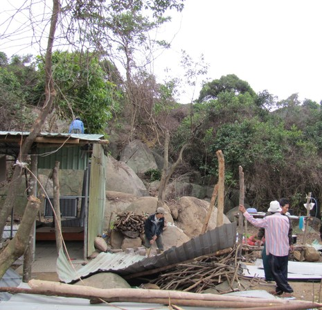 Khởi tố vụ án phá rừng tại Khu bảo tồn thiên nhiên Sơn Trà - ảnh 1