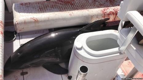 Cá heo bỗng dưng nhảy vào 'nộp mình' trên du thuyền - ảnh 1
