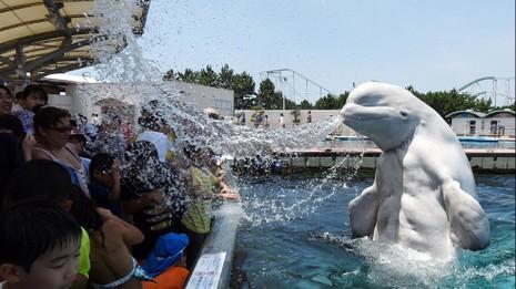 Nhật nắng nóng kinh hoàng, hơn 6000 người nhập viện  - ảnh 3