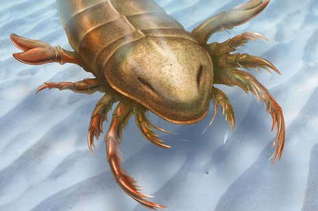 Phát hiện hóa thạch bò cạp biển khổng lồ - ảnh 1