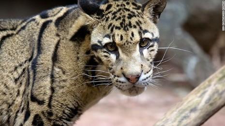 Mỹ phát triển 'sở thú đông lạnh' để ngăn tuyệt chủng - ảnh 1