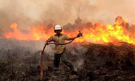 Khí thải cháy rừng Indonesia có thể 'làm 110.000 người chết' - ảnh 2