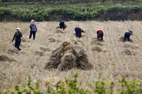 Triều Tiên cảnh báo người dân về nạn đói - ảnh 1