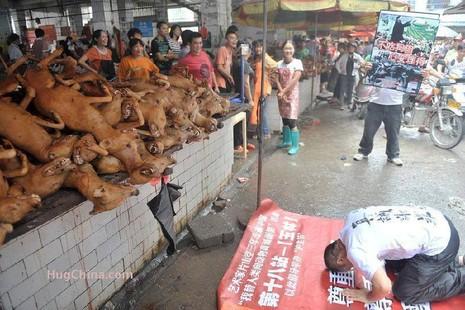 Trung Quốc cam kết 'dẹp tiệm' lễ hội thịt chó - ảnh 1