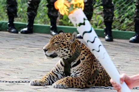 'Linh vật' đội Olympic Brazil bị bắn chết ngay sau lễ rước đuốc - ảnh 1