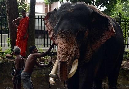 Voi con Sri Lanka