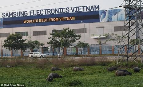 Khai tử Note 7 và số phận nhà máy Samsung SDI Việt Nam - ảnh 1