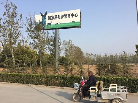 Trung Quốc: Giết hàng triệu con lừa để chế 'tiên dược'