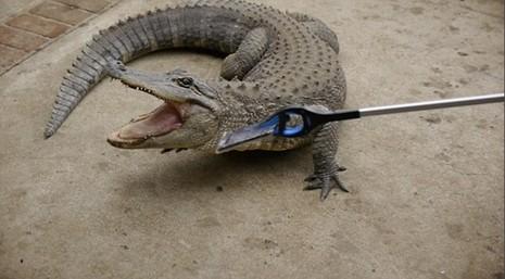 Cá sấu cắn điện thoại iPhone 7, điều gì sẽ xảy ra? - ảnh 1