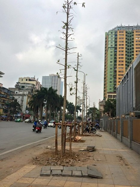 Phó Thủ tướng chỉ đạo vụ chặt cây ở Hà Nội - ảnh 2
