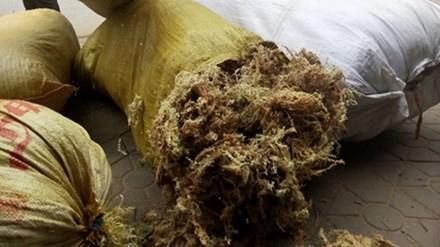 Rêu đá phơi khô chuẩn bị xuất bán.