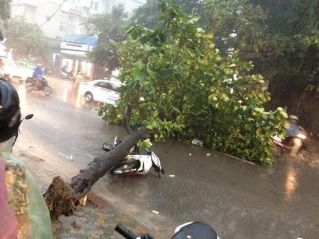 Hà Nội mưa giông kinh hoàng, cây đổ, xe lật, nhà bật móng - ảnh 1