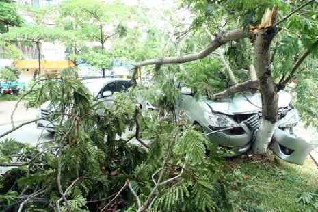 Innova 7 chỗ bẹp dúm sau khi tông gẫy đôi cây trên phố Hà Nội  - ảnh 6