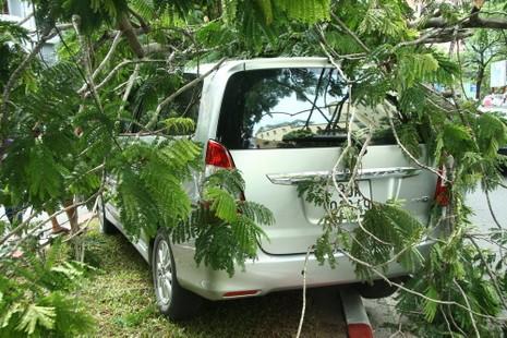 Innova 7 chỗ bẹp dúm sau khi tông gẫy đôi cây trên phố Hà Nội  - ảnh 7