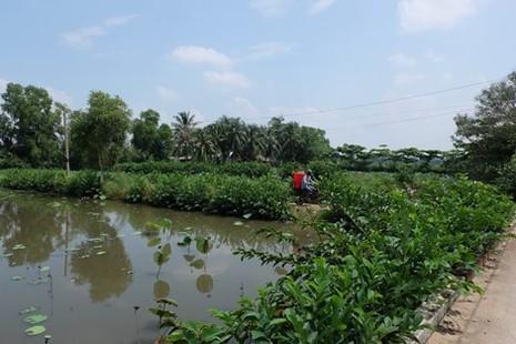 Kiến nghị giao Bitexco xây hai cây cầu vào bán đảo Thanh Đa - ảnh 1
