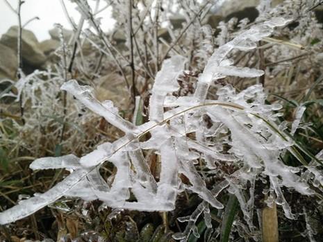 Nhiều nơi ở miền Bắc chìm trong băng tuyết lịch sử âm 6-8 độ C - ảnh 23