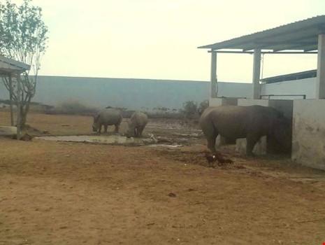 Long An: Vườn thú Mỹ Quỳnh chỉ còn tám cá thể thú - ảnh 1