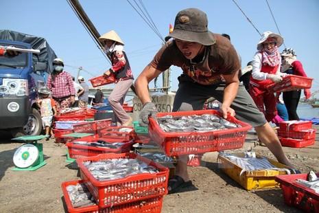 Đã có kết quả xét nghiệm hải sản tươi sống ở 4 tỉnh miền Trung - ảnh 1