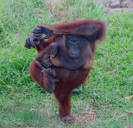 Cùng thư giãn với những động tác yoga 'siêu chuẩn' của loài vật - ảnh 1
