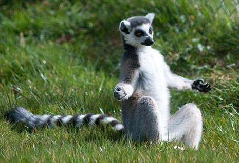 Cùng thư giãn với những động tác yoga 'siêu chuẩn' của loài vật - ảnh 4