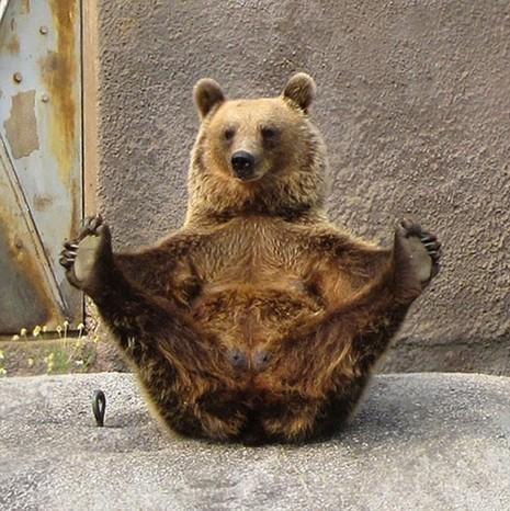 Cùng thư giãn với những động tác yoga 'siêu chuẩn' của loài vật - ảnh 10
