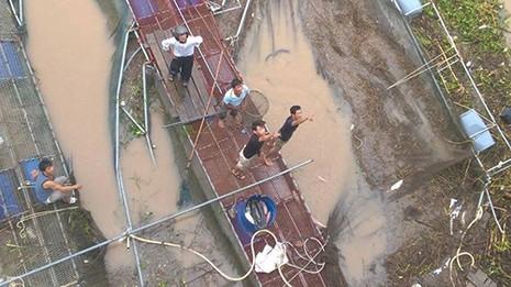 Đổ xô đi câu hàng trăm tấn cá bị sổng trên sông Kinh Thầy - ảnh 1