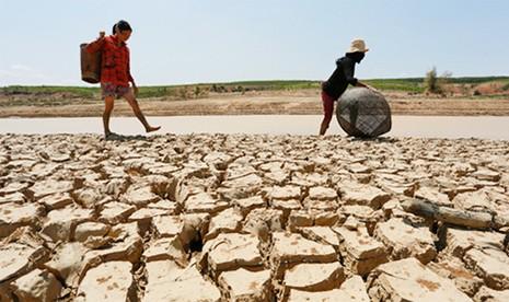 Thủ tướng yêu cầu hỗ trợ 904 tấn gạo cho tỉnh Bình Định - ảnh 1