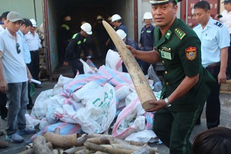 Cận cảnh ba container chứa hơn 2,2 tấn ngà voi ở Đà Nẵng - ảnh 4