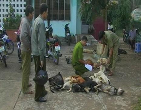 Tạm giữ ba thanh niên chở 27 con chó bị đánh bả - ảnh 1