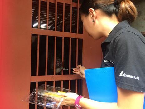 Con gấu nuôi nhốt để lấy mật cuối cùng ở Quảng Ninh được cứu - ảnh 1