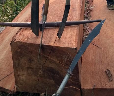 Cả năm điều tra tìm không ra người phá rừng ở Gia Lai - ảnh 1